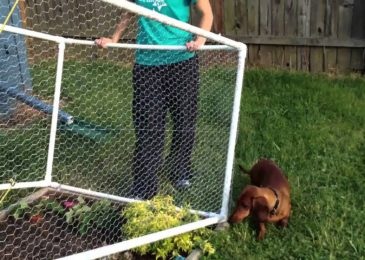 Important Tips To Get The Best Plastic Fences For Your Purpose