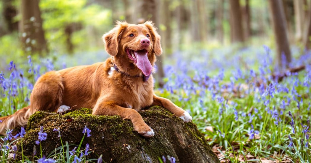 Teach Your Child To Be A Responsible Pet Parent! Here's How?