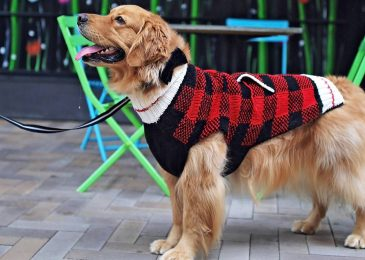 Paws For Fashion: The Latest On-Trend Dog Accessories