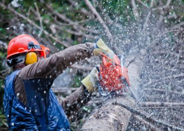 Top Ways To Find The Right Tree Surgeons For Your Garden