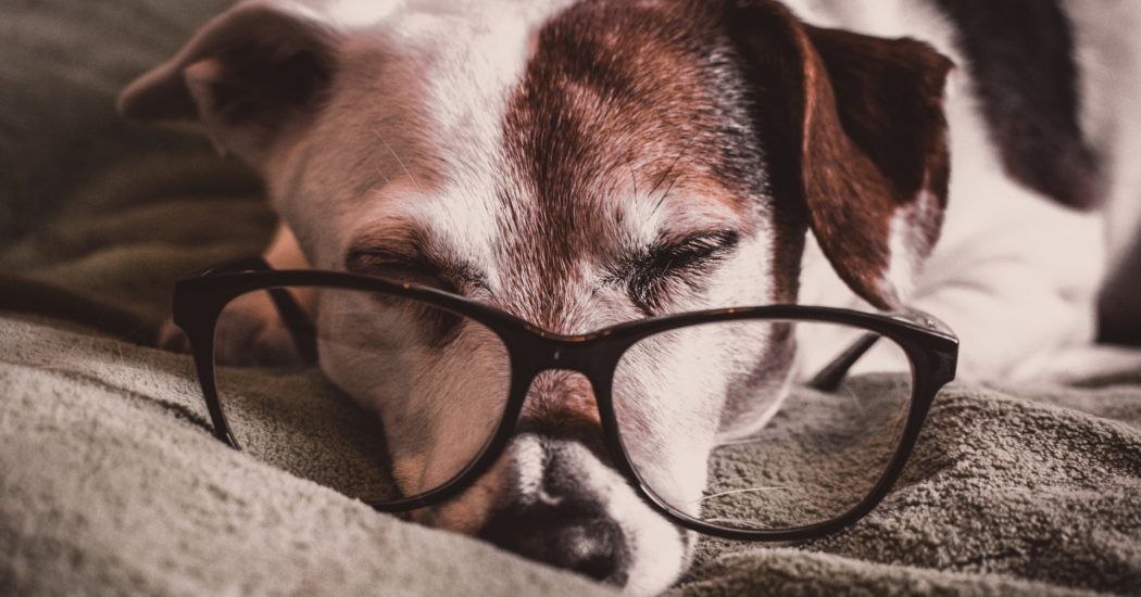 Why Hiring Professionals Is A Good Option For Pet Photography?