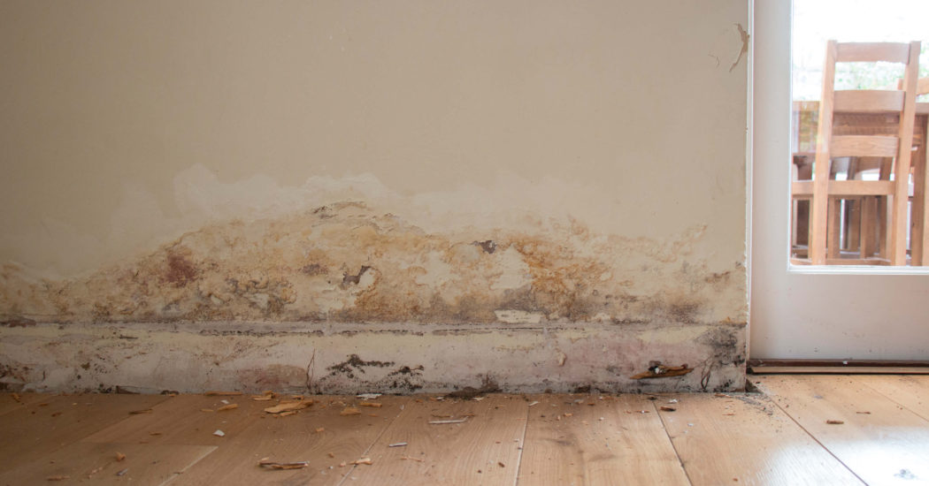 Everything You Need to Know About Dampness