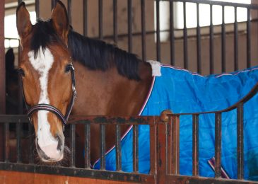 Top Tips For Storing Your Horse Rugs