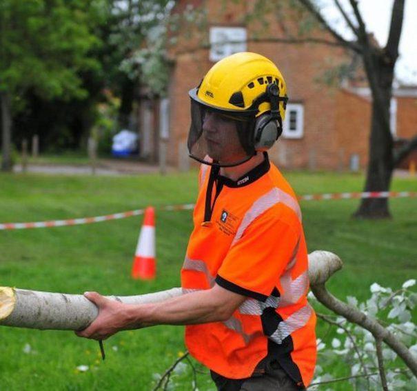 Guide To Hiring Tree Surgeons In Tiptree